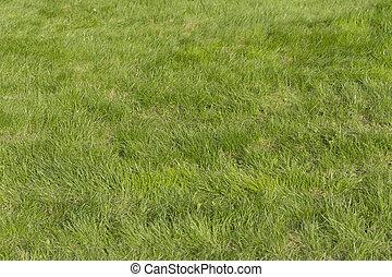 exuberante, hierba verde, en, el, campo del fútbol