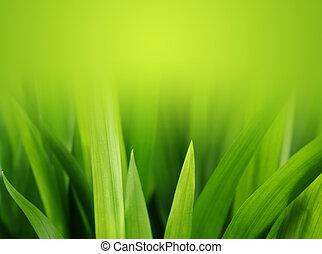 exuberante, pasto o césped, verde