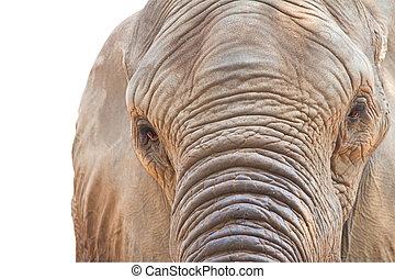 EYe an elephant