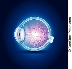 Eye anatomy blue design, beautiful bright colors.