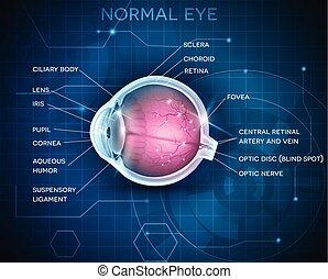 Eye anatomy on a blue technology background