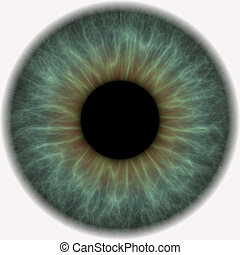 eye ball - an open eyeball with lens in center