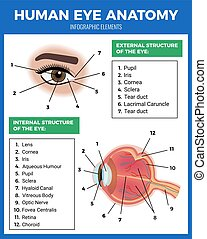 Eye Care Poster - Eye care poster with human eye anatomy...