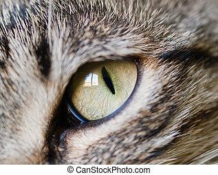 Eye cat detail