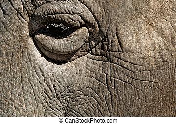 eye closeup of african elephant