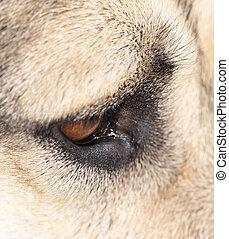 Eye dog. macro