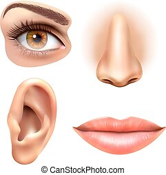 Eye Ear Lips Nose Icons Set - Human face parts 4 sense...