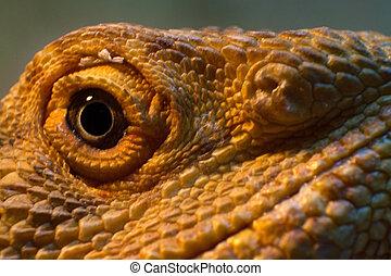 Eye of a Bearded Dragon