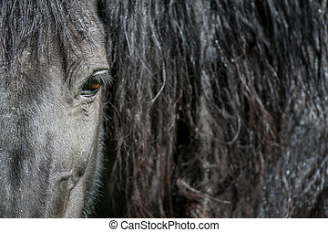 Eye of a black horse, lit by the sun. Focus on the eyelashes