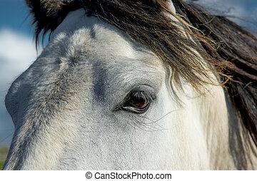 Eye Of A White Horse