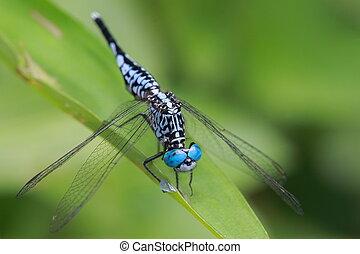 eye of blue dragonfly