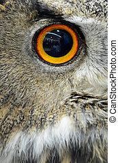 Eurasian Eagle Owl - Eye of Eurasian Eagle Owl