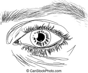 EYE - Vector human eye