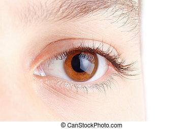 Eye with beautiful long lashes, brown, macro.