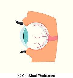 Eyeball, anatomy of human eye cartoon vector Illustration on...