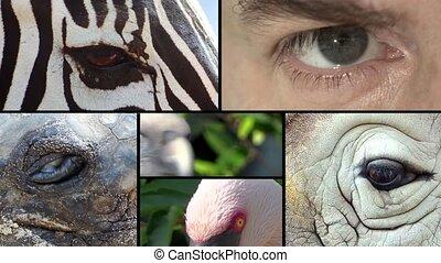 Eyes, collage