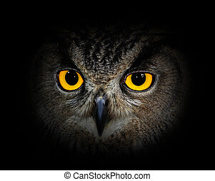 Eyes eagle owl on black background