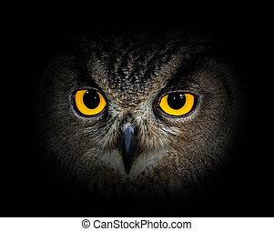 Eyes eagle owl on black background