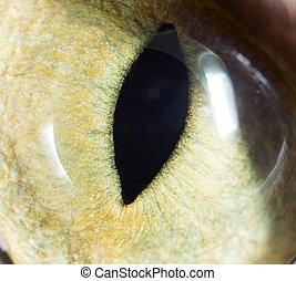 eyes., gato, super, amarela, macro