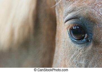 eyes, geïnspireerde