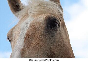 eyes, horse\'s