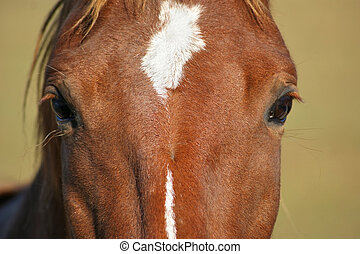 Eyes of a Horse Closeup - Closeup view of the eyes of a...