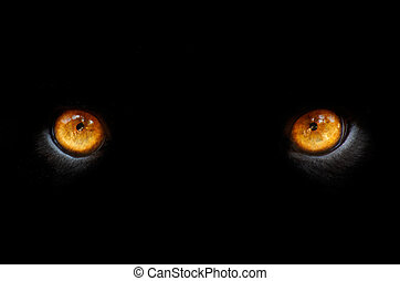 eyes of a pather - eyes of a panther in the dark