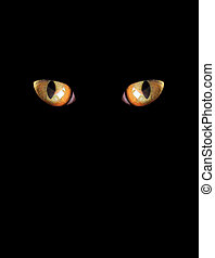 eyes of cat on the black background - eyes of cat isolated...