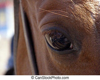Eyes of the horse 1      - Eyes of horse is macro.