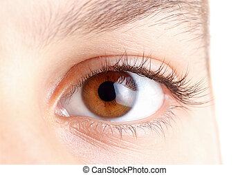 Eyes with long beautiful eyelashes, brown, macro.