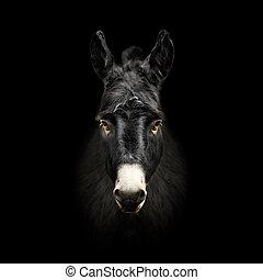 ezel, gezicht, vrijstaand, op, zwarte achtergrond