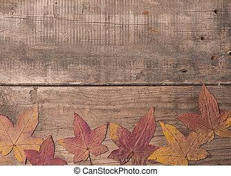 fából való, ősz kilépő, öreg, háttér