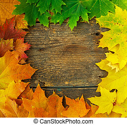 fából való, ősz kilépő, juharfa, háttér