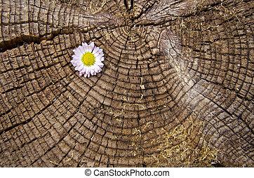 fából való, idős, virág, öreg, háttér