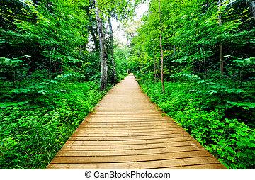 fából való, irány, alatt, zöld erdő, buja, bush., csendes,...
