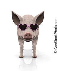 fárasztó, friss, kismalac, sunglasses.