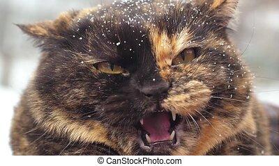 fâché, hiver, siffler, chat