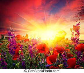 fält, av, blomning, vallmoer