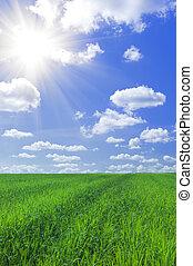 fält, av, gräs, och blåa, sky