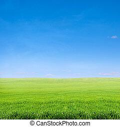 fält, av, grönt gräs, över, blåttsky
