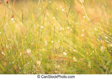 fält, av, grönt gräs, in, den, morgon