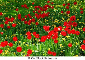 fält, blomma