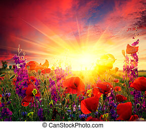 fält, blomning, vallmoer