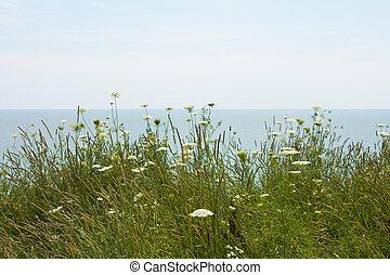 fält, blomningen, insjö