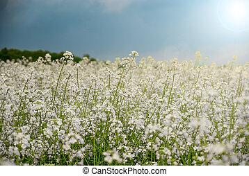 fält, Blomstrar