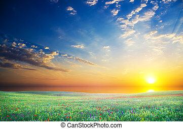fält, Blomstrar, grön, blomning