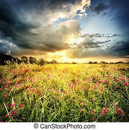 fält, Blomstrar, röd