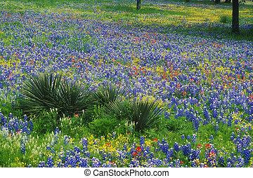 fält, bluebonnets, målarpensel
