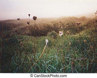 fält, drömmar