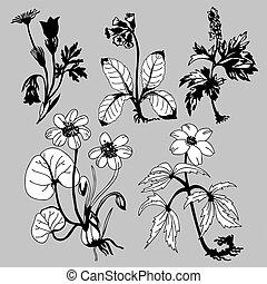 fält, flowerses, på, grå fond, vektor, illustration